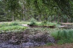 Mariebergskogen